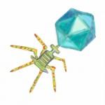 Phage
